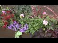 Idée de jardinière pour balcon ensoleillé : plantes de plein soleil - Jardinerie Truffaut TV