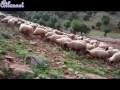 Paysages du Moyen Atlas marocain
