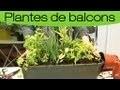 Faire une jardinière de plantes aromatiques