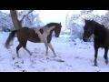 Neige aux Pieux : Chevaux joyeux