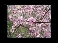 Les plus beaux paysages Japonais en musique ! [HD]