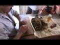 La fabrication artisanale d'un cigare à Cuba