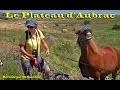Le plateau d'Aubrac: Des paysages et des vaches à perte de vue.