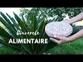 Couvercle alimentaire