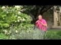 Comment et quand tailler la lavande - Jardinerie Truffaut TV
