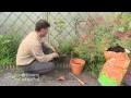 Comment planter vos grimpantes : clématite, glycine,...?