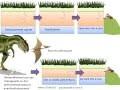 SVT - cours- formation des roches sédimentaires et fossilisation