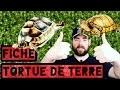 TORTUE DE TERRE FICHE D'ÉLEVAGE MAINTIENS  - REPTILES FRANCE TV