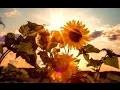 BELLE NATURE Et Douce Musique 💦 Ruisseau Oiseaux Fleurs Vent Champs – Étude Détente Sommeil Rêverie
