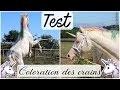 TEST : Usayn en licorne