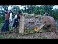 Construire une maison de lapin en utilisant du bambou et de la boue!!!