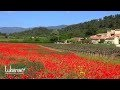 Coquelicots du Luberon Côté Sud - Red poppies in Provence