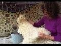 Dis, comment tu laves la laine d'une toison?