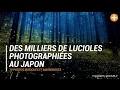 Des milliers de lucioles photographiées au Japon