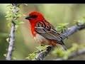 La #nature les #oiseaux et la faune forestière