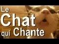 LE CHAT QUI CHANTE - PAROLE DE CHAT
