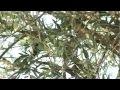 Comment planter, tailler et entretenir un olivier ? - Jardinerie Truffaut TV