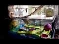 non aux hamsters dorés-syriens dans des cages minuscules