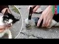 Un adorable chat prisonnier d'un bocal de verre est secouru