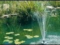 Nettoyer le bassin du jardin