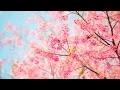Musique Douce Sans Parole | Musique Piano | Musique Relaxante Anti Stress