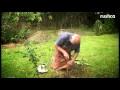 Greffe en incrustation d'un abricotier sur un prunier