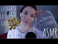 ASMR pour les fans de chat (multi-déclencheurs)
