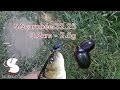 Chub au S.Scarabee.32.25 - 3.2cm 2.5g -Handmade lures