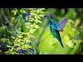 Sons de la Nature pour Dormir, Relaxation, Travailler, se Concentrer | Bruits Nature Forêt Oiseaux