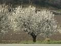01 - PROVENCE : De village en village, au printemps