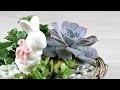 DIY - Le jardin de succulentes du Lapin | tutoriel facile de succulentes décoration pour Pâques #2