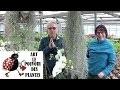 Conseils jardinage: Tillandsia usneoides: Entretien et l'arrosage: Plante verte d'intérieur