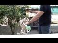 Désassembler des palettes (Construction d'une clôture en bois Part 1/2)
