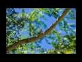 Chant des cigales - Bruit des cigales - Relaxation