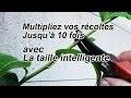 Multipliez vos récoltes de 2 à 10 fois avec la taille  vert ou taille d'été intelligente
