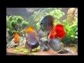 I.T.H. de Gembloux - Projet aquarium paysagé