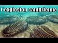 L'explosion cambrienne et les schistes de Burgess — Science étonnante #36