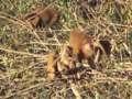 (3/8) Niokolo-Koba * SENEGAL * Wassadou * Les animaux du parc National du Niokolo-Koba