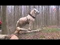 Le cheval boulonnais, une race à préserver