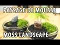 Comment créer un paysage miniature de mousse - Bonsaï