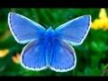 Les plus beaux papillons du monde.