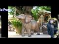 Décoration jungle safari pour anniversaire