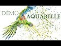 Démonstration d'aquarelle : Perroquet
