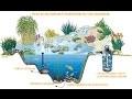 Créer son bassin d'ornement, bassin de jardin, avec filtration naturelle