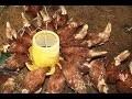 [BRICOLAGE] Fabriquer un mangeoire pour poules.