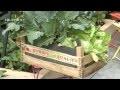 Comment créer un potager de balcon ?  - Jardinerie Truffaut TV