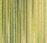 50 G «catania color-couleur: 76?plantage-sommergarn de haute qualité peigné et mercerisé, gasierter coton de grande variété des couleurs-la baumwollklassiker.