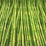 Canne en bambou Imprimé Rideau Tissu d'ameublement Tissu de coton Matériau) cm large Vert/Vendu au mètre/