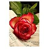 Kangrunmy 5D Peinture en Diamant DIY Point de Croix en Résine Décoration de Maison Salon Chambre - floral Rouge à ...