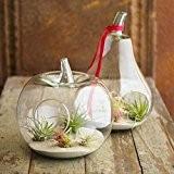 2Apple Poire cristal fleur vase en verre plantes succulente Terrarium conteneur hydroponique Pot Décoration Fête Mariage Anniversaire Cadeau de Noël